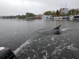 Der Kieler Delfin beim RVR